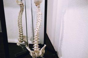 Schroth ohmd9isuit8buosleohwfqz42qudn8kcvecf9dwwfq - Fysiotherapeutisch Instituut Alkmaar